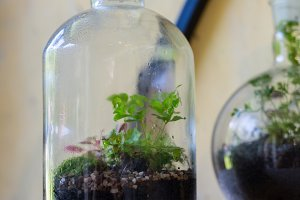 Plants grow in closed glass jars, a