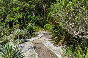 A hiking path or running trail in