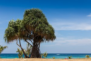 Untouched tropical beach in Sri