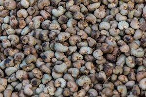 Nut Tree Cashew Growing Nuts