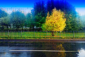 Autumn tree in park after the rain l