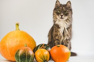 Charming, gray kitten and ripe