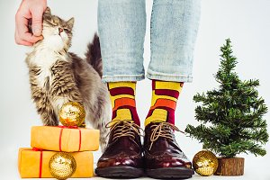 Funny socks, fluffy kitten and