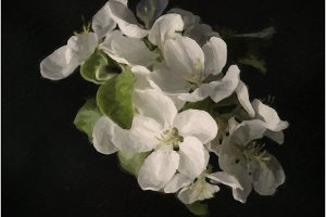 beautiful painted apple blossom tree