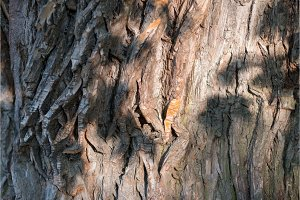 Old Wood Tree Texture Background