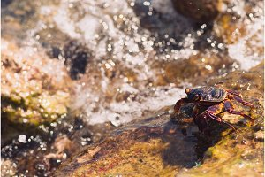 Wet sea crab on the stone, sunny