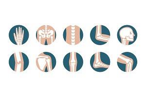 Human joints and bones symbols
