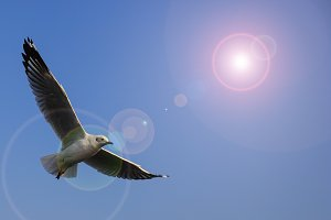 Seagulls fly in fresh blue days in t