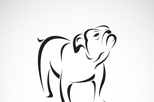 Vector of bull dog design. Pet.