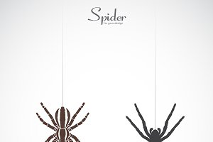 Vector of spider. Insect. Animal.