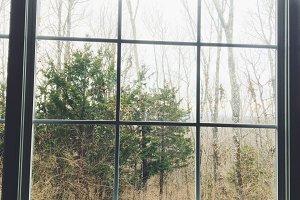 Window in Woods