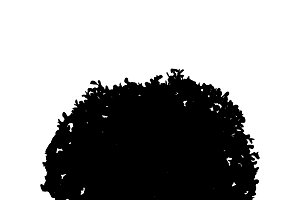 Bush silhouette on white background