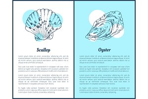 Scallop and Oyster Marine Creatures