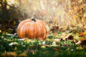 Big pumpkin on autumn lawn
