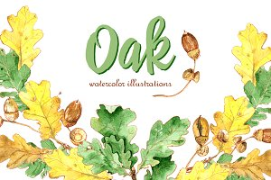 Oak. Watercolor illustration