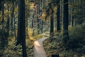 Nature, journey, travel, trekking an
