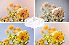 Fresh Yellow Roses Bundle