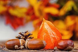 Still life autumn background