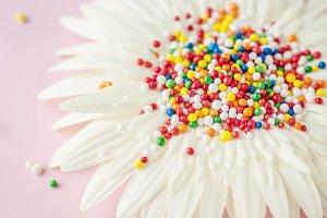 Wall Art Print, White Flower, Candy