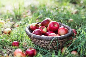 Apples in wicker basket on the