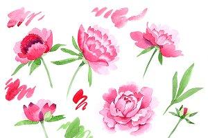 Crimson Peonies PNG watercolor set