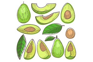 Avocado vector green organic food