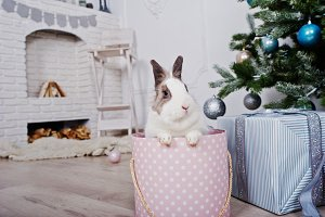 Funny bunny rabbit at gifts box unde
