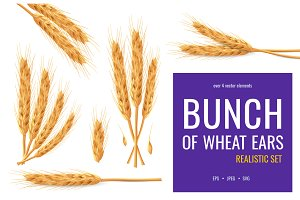 Bunch of wheat ears icons set