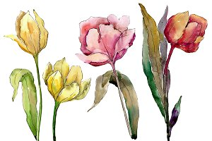 Colorful tulips PNG watercolor set