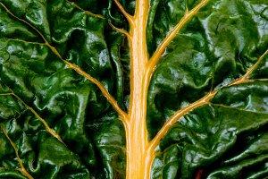 Fresh Chard Leaf