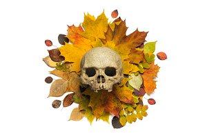 Skull halloween concept