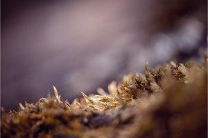 Closeup the moss macro shot. Shallow