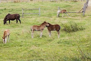 group of little foals playing togeth