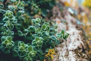 Fluffly Plants