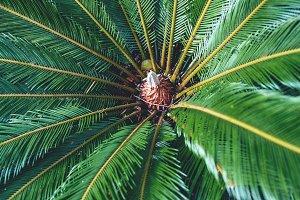 Large Jungle Plant