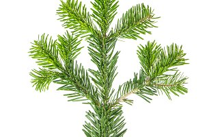 Spruce twigs Branch Christmas tree i