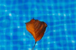 Tree leaf in the pool