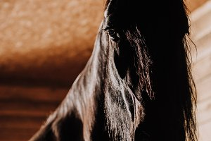 selective focus of beautiful horse i