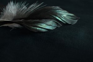 Dark feather