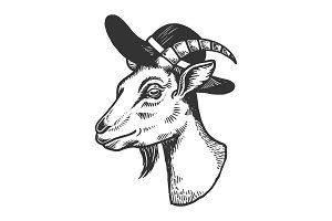 Goat in broad brim hat engraving