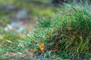Fresh green grass with dew drops.