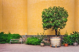 Bright orange wall, potted tree.
