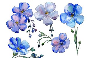 Wildflower blue flax PNG watercolor