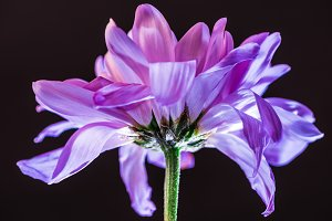 close up of flower with purple petal