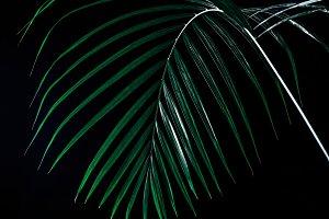 tropical palm leaf in dramatic light