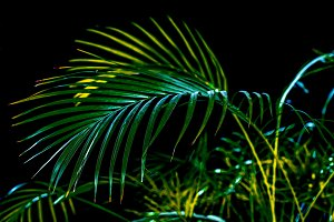 tropical green palm leaves, isolated