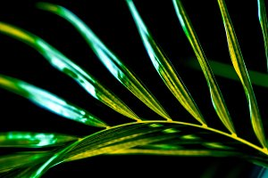 close up of green palm leaf, isolate