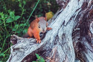 A cute squirrel in the forest.