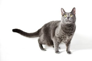 Lovely grey cat with yellow eyes