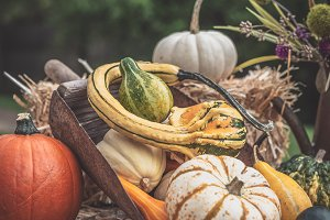 Assorted Autumn Gourds